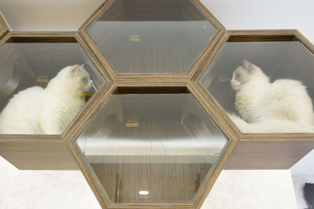 高雄 Cafedog寵物沙龍 寵物美容x網美咖啡廳複合店 優質服務和時尚空間 給毛小孩舒適SPA美容46.JPG