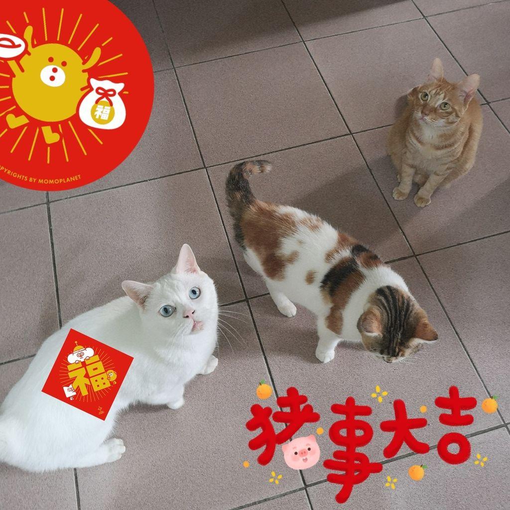 高雄 Cafedog寵物沙龍 寵物美容x網美咖啡廳複合店 優質服務和時尚空間 給毛小孩舒適SPA美容54.jpg