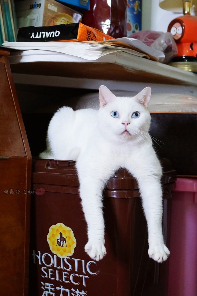 OLLIE CAT 愛貓選物純淨礦砂 回購率高!好清理 除臭力高 高品質礦砂觸感貓孩好喜歡!!1A.JPG