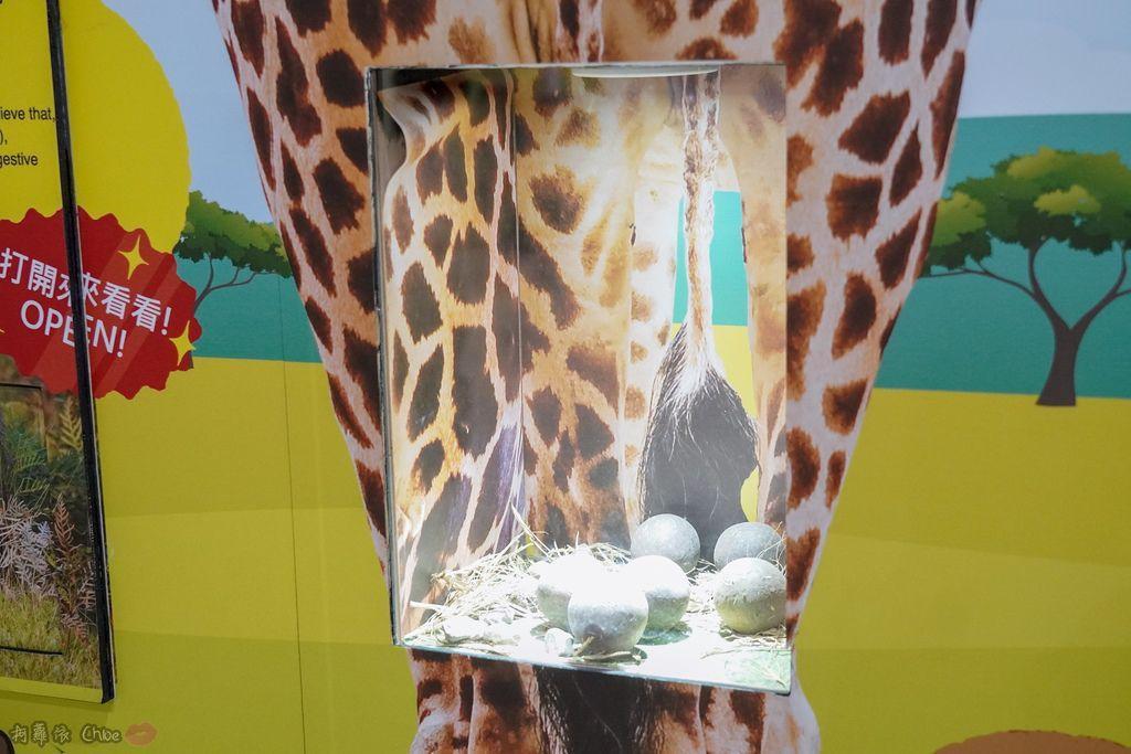 高雄科工館 變變變!MOVE生物體驗展 六大展區 寓教於樂 體驗動物大變身 by柯蘿依Chloe51.jpg