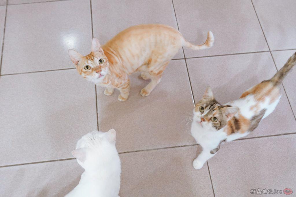用過就回不去的貓砂!OLLIE CAT愛貓選物純淨礦砂低塵款1.JPG