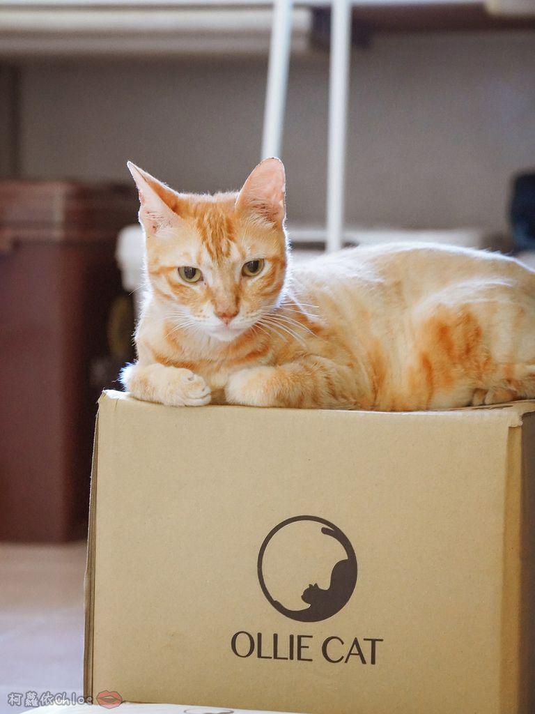 用過就回不去的貓砂!OLLIE CAT愛貓選物純淨礦砂低塵款3.JPG