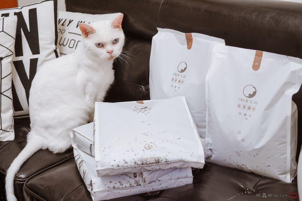 用過就回不去的貓砂!OLLIE CAT愛貓選物純淨礦砂低塵款10.JPG