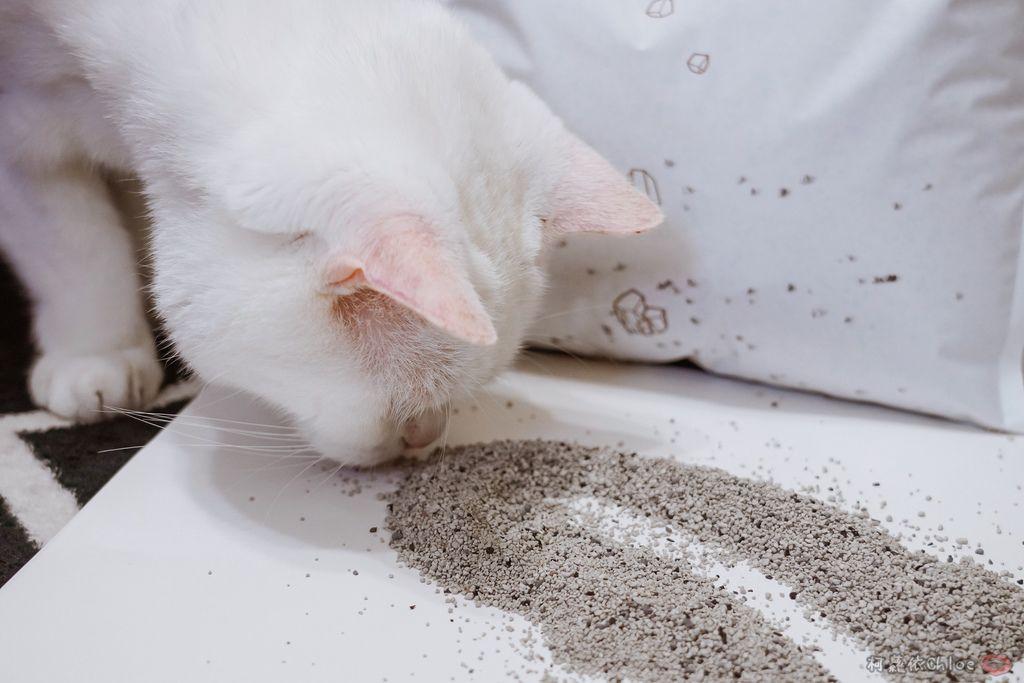 用過就回不去的貓砂!OLLIE CAT愛貓選物純淨礦砂低塵款22.JPG
