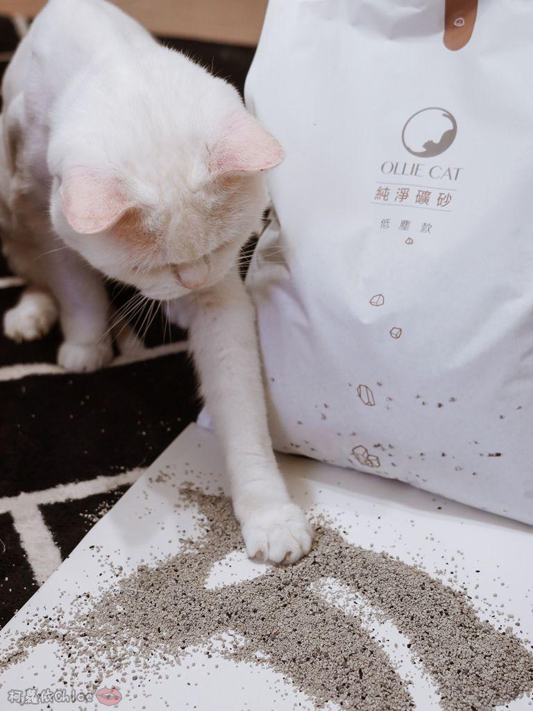 用過就回不去的貓砂!OLLIE CAT愛貓選物純淨礦砂低塵款24.JPG