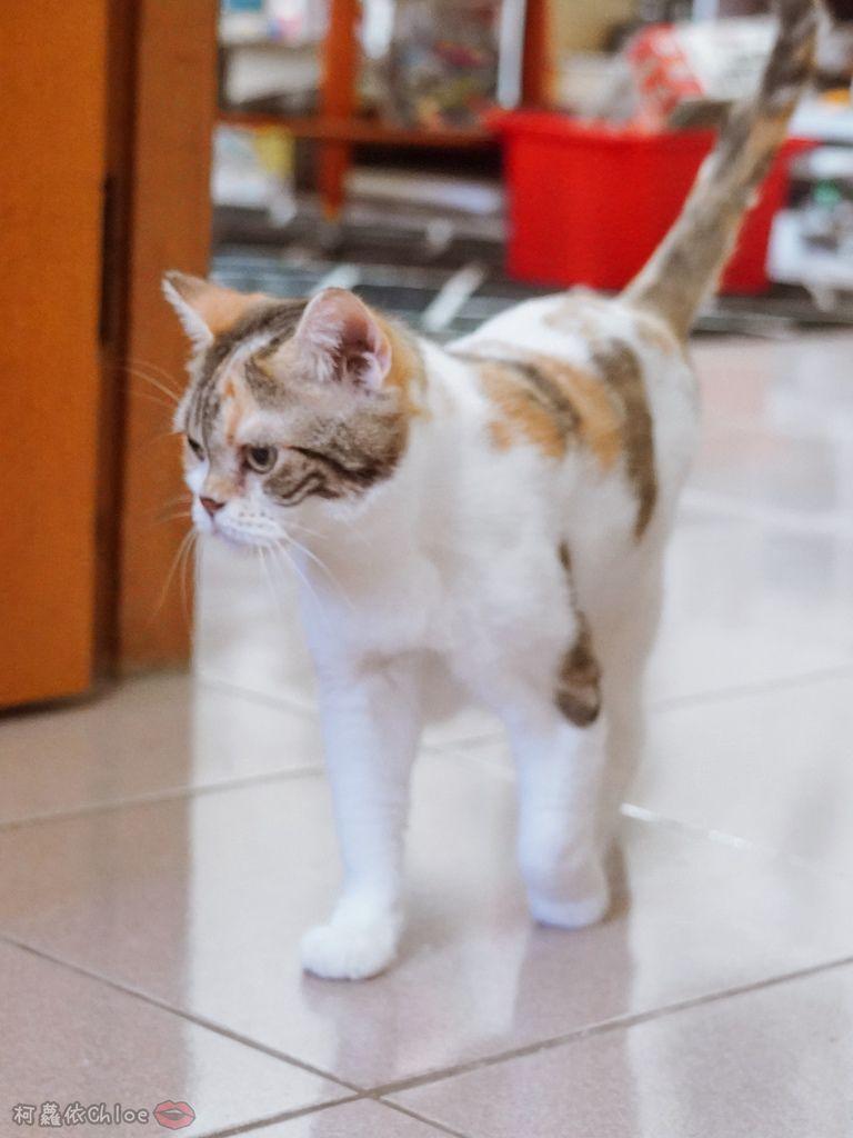 用過就回不去的貓砂!OLLIE CAT愛貓選物純淨礦砂低塵款29.JPG