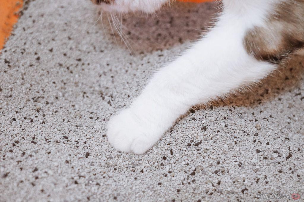 用過就回不去的貓砂!OLLIE CAT愛貓選物純淨礦砂低塵款33.JPG