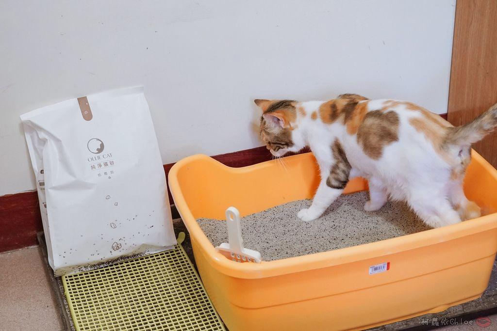 用過就回不去的貓砂!OLLIE CAT愛貓選物純淨礦砂低塵款34.JPG