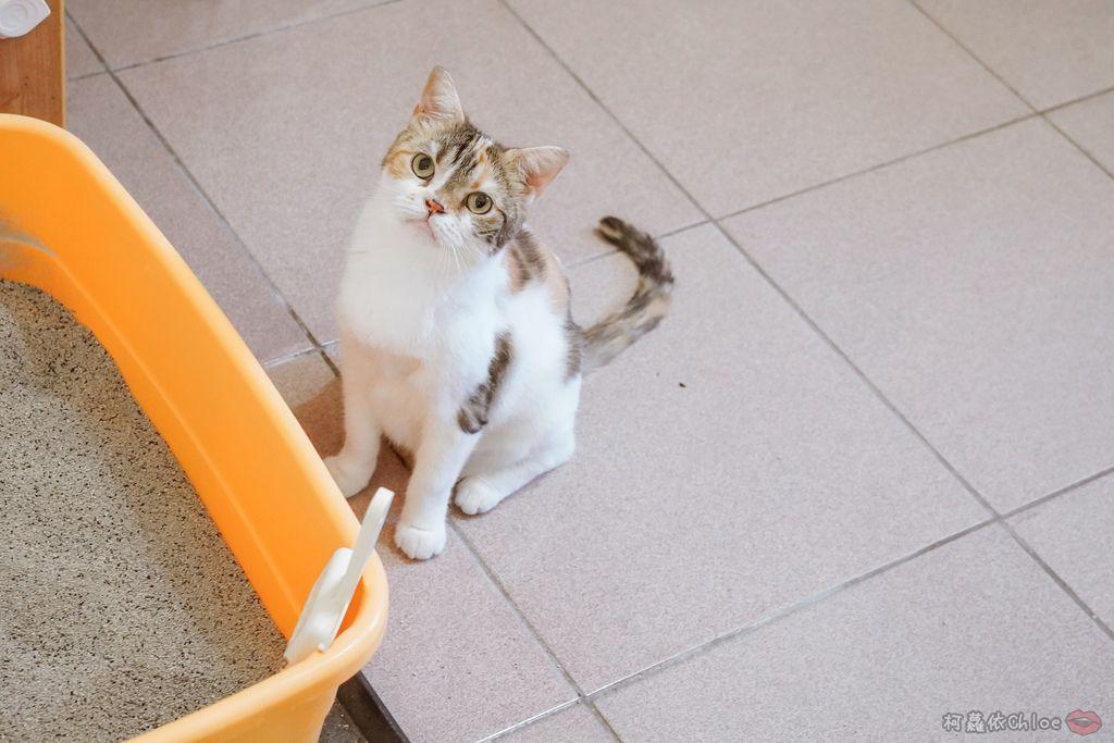 用過就回不去的貓砂!OLLIE CAT愛貓選物純淨礦砂低塵款38.JPG