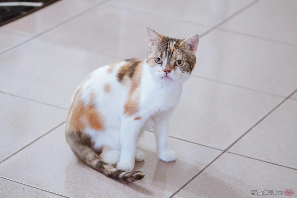 用過就回不去的貓砂!OLLIE CAT愛貓選物純淨礦砂低塵款39.JPG