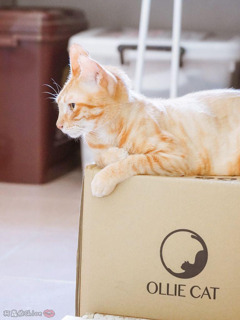 用過就回不去的貓砂!OLLIE CAT愛貓選物純淨礦砂低塵款46.JPG