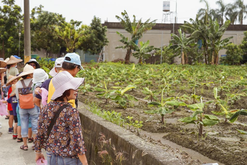 屏東萬丹 竹林有機農場 親子半日遊推薦 親子椿康節農村體驗11.jpg