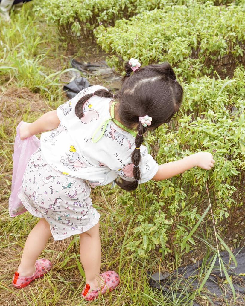 屏東萬丹 竹林有機農場 親子半日遊推薦 親子椿康節農村體驗18.jpg