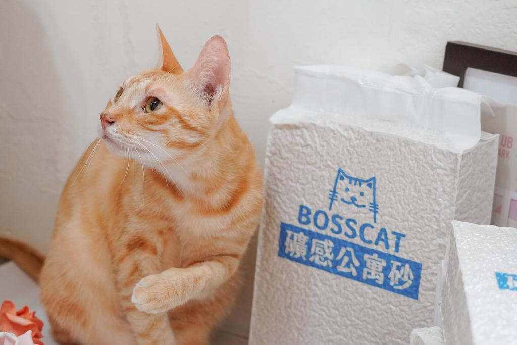 室內養貓首選貓砂貓老闆 礦感公寓砂 凝結力強 可沖馬桶的豆腐砂1.jpg