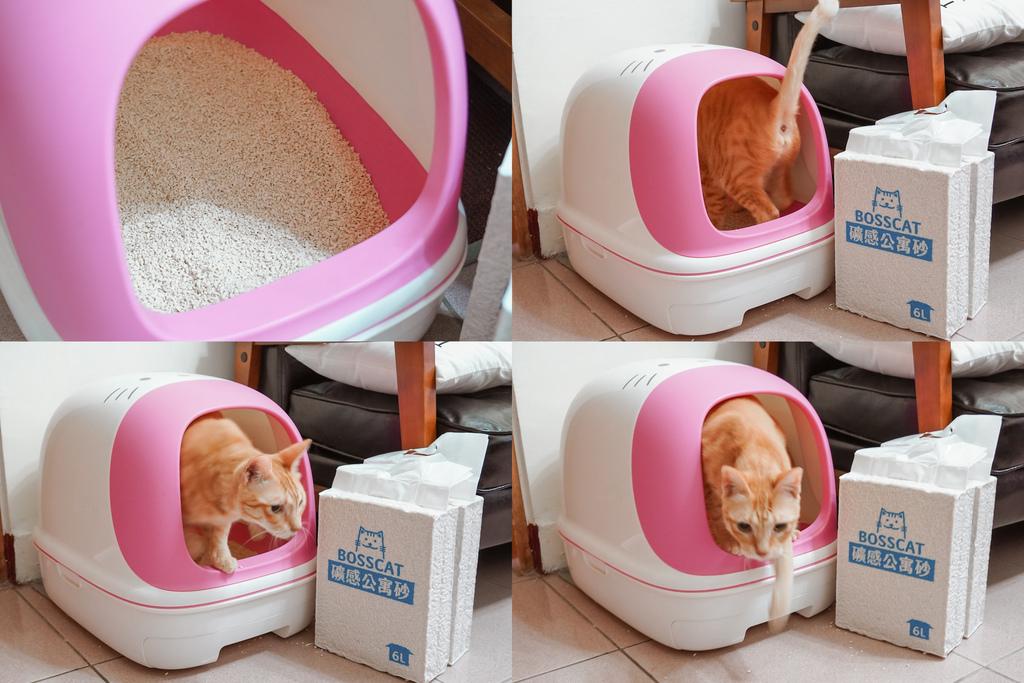 室內養貓首選貓砂貓老闆 礦感公寓砂 凝結力強 可沖馬桶的豆腐砂10.jpg