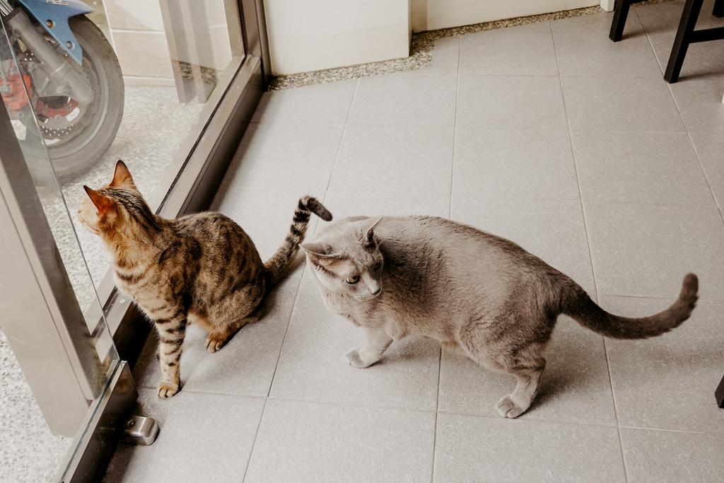 屏東特色咖啡店 槍與咖啡 義大利麵 中式簡餐 咖啡甜點 生存遊戲迷必來~店貓也超可愛13.jpg
