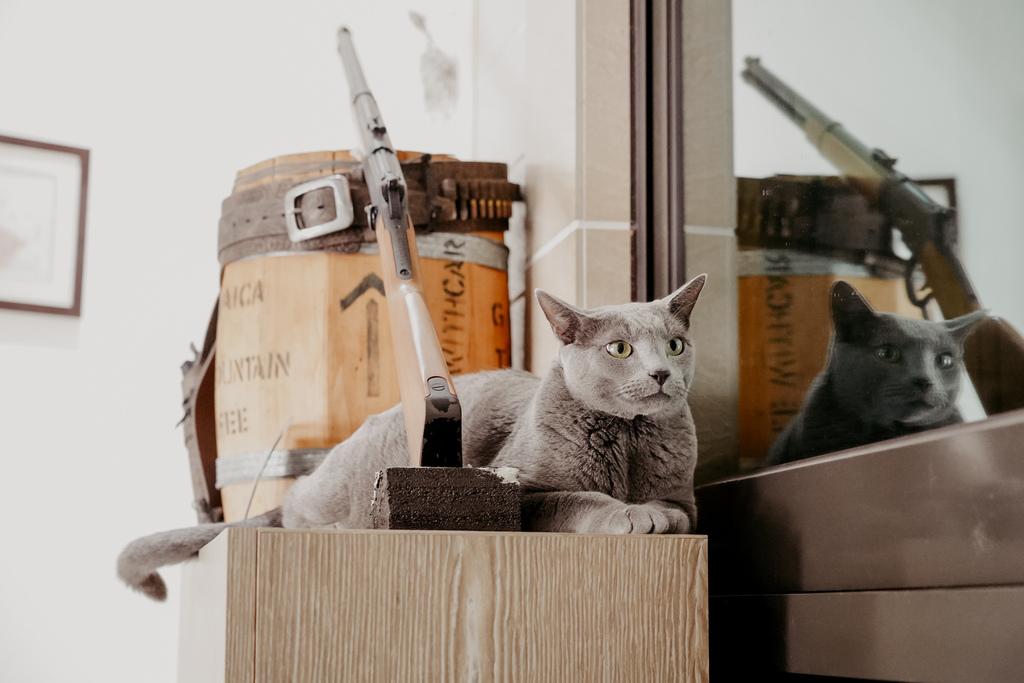 屏東特色咖啡店 槍與咖啡 義大利麵 中式簡餐 咖啡甜點 生存遊戲迷必來~店貓也超可愛15.jpg