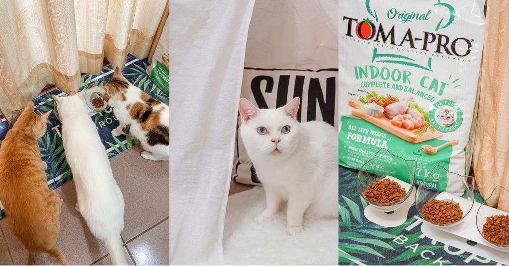 貓飼料推薦 優格寵物食譜 室內貓 雞肉+米 嗜口性佳 益生菌添加 專為活動量較低的貓咪設計.jpg