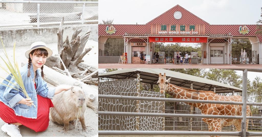 台南景點 頑皮世界 南台灣最大野生動物園 長頸鹿 藪貓 科摩多龍 還可以預約近距離互動南美水豚.jpg