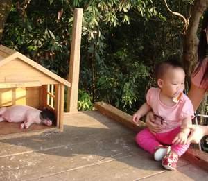 閔閔看小豬.JPG