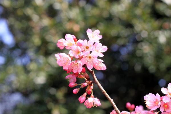 sakura-097.jpg
