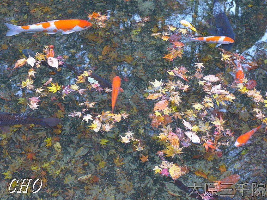 2013-11-27_08-12-55_P_pixnet