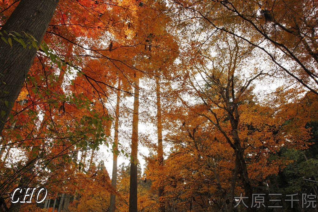 2013-11-27_08-23-01_C_pixnet