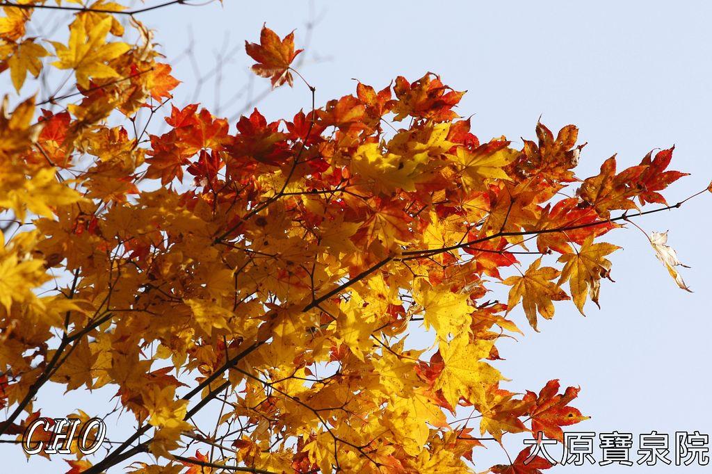 2013-11-27_10-11-36_C_pixnet
