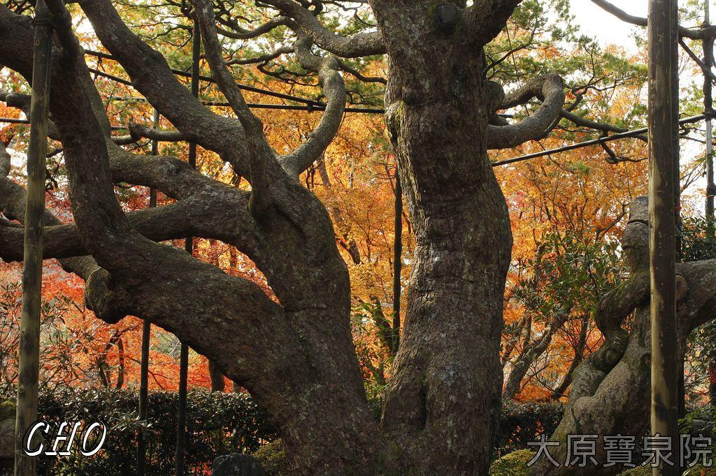 2013-11-27_09-41-51_C_pixnet