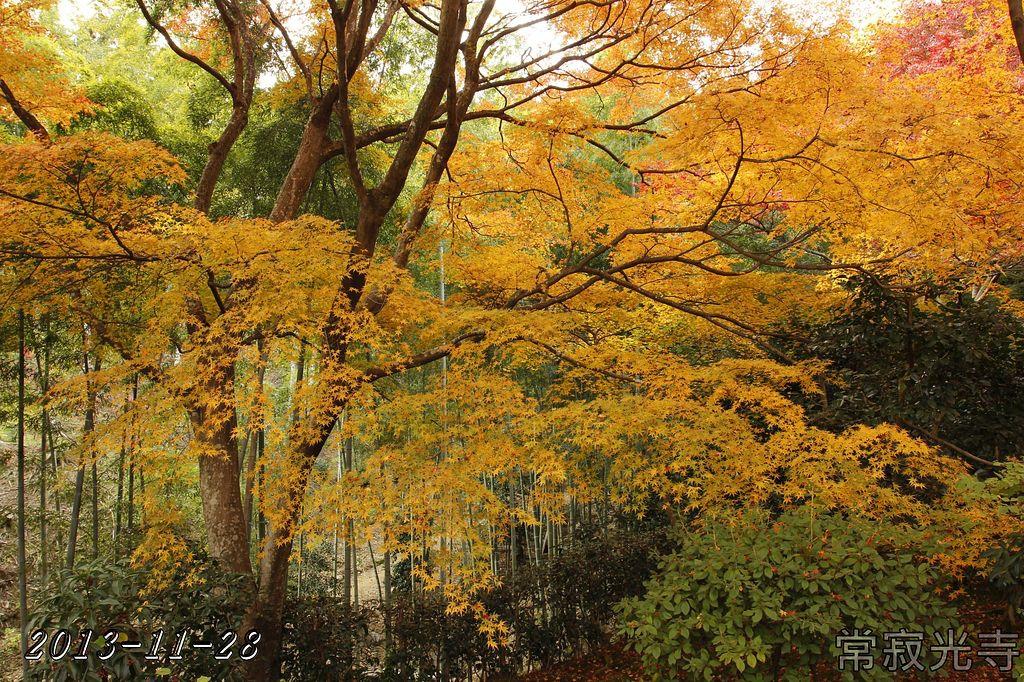 2013-11-28_10-04-39_C_pad