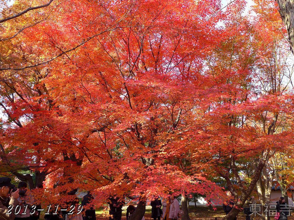 2013-11-29_09-02-46_P_pad