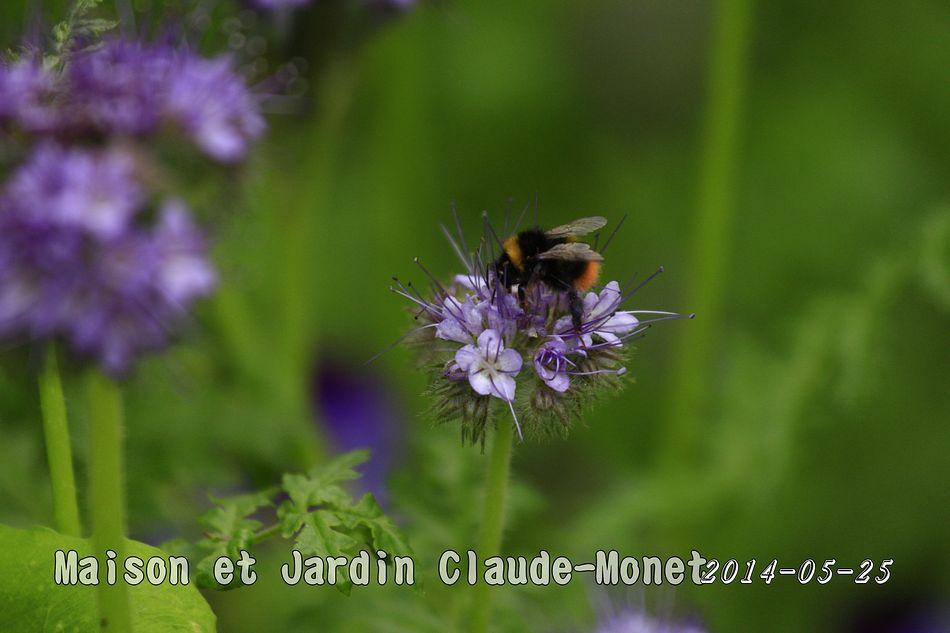 2014-05-25_17-39-26_C_pixnet