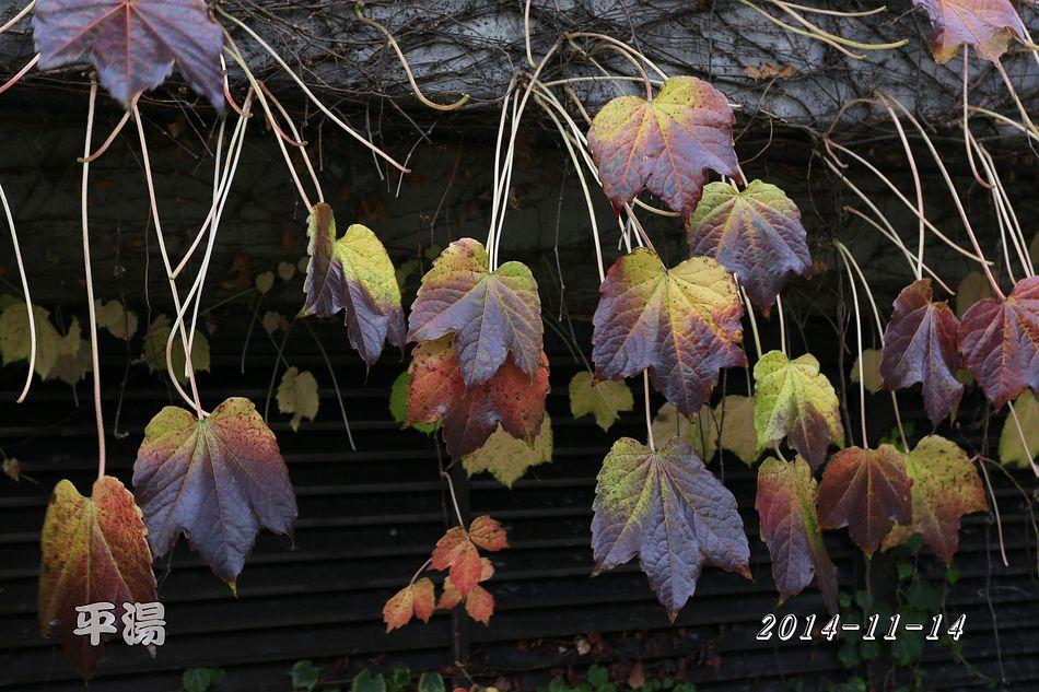 2014-11-14_10-58-17_C_pixnet