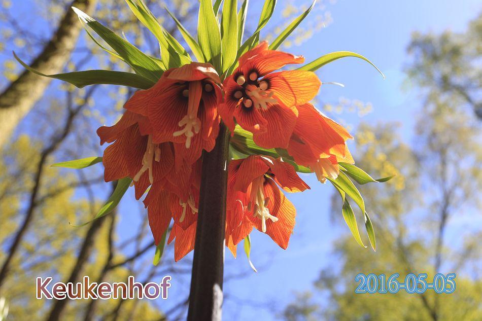 xn_2016-05-05_15-12-58C.JPG
