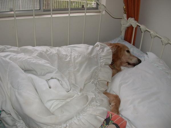 ChoCho Bed.jpg
