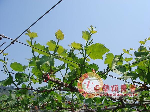 (4)花穗02.JPG