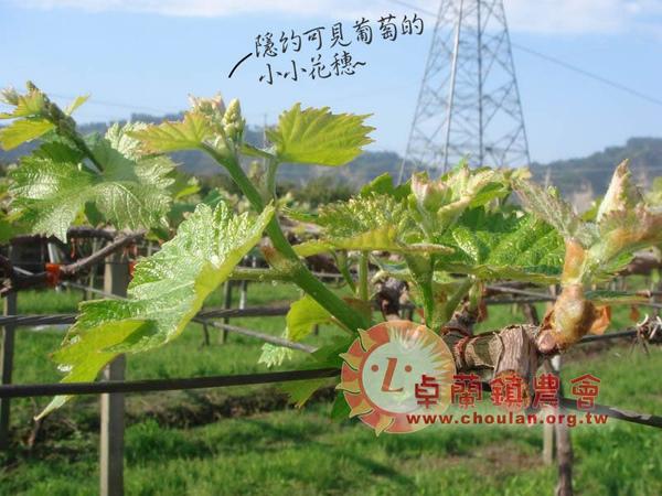 (3)萌芽03.JPG