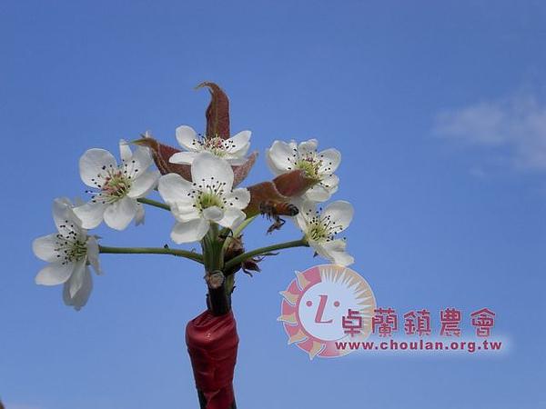 (2)開花2.jpg