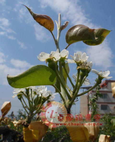 (2)開花3.jpg