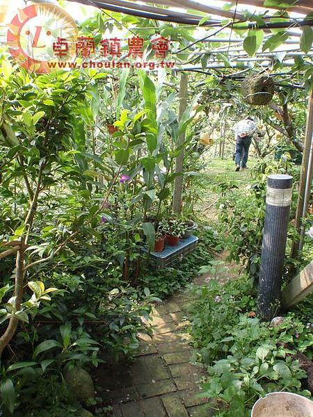 插曲-小庭園2.jpg