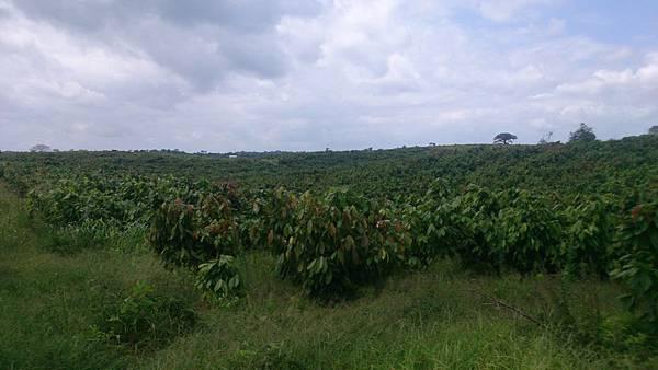 巧克力農場