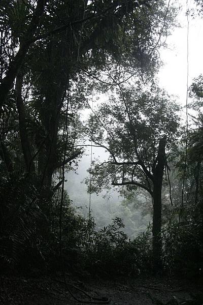 2 棲蘭山1aa.jpg