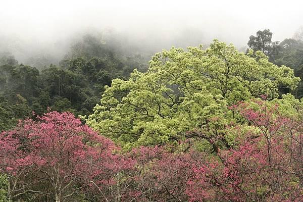 11棲蘭山莊6.jpg