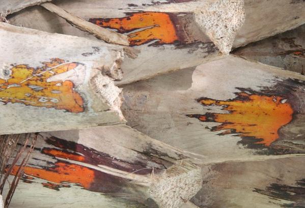 27. 棕櫚樹 palm tree.jpg