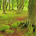 65. Clava woods adjascent to the Findhorn community of New Age spiritual pursuits.jpg