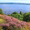 69. heathers石南花 Loch Lomond.jpg