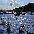 72.Loch Lomond .jpg