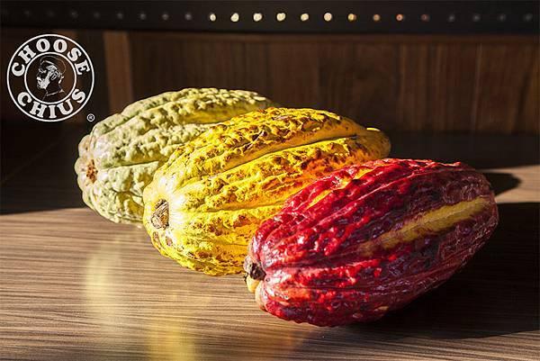可可果莢 Cacao pods