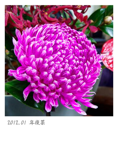 2012-01-年夜菜-004.jpg