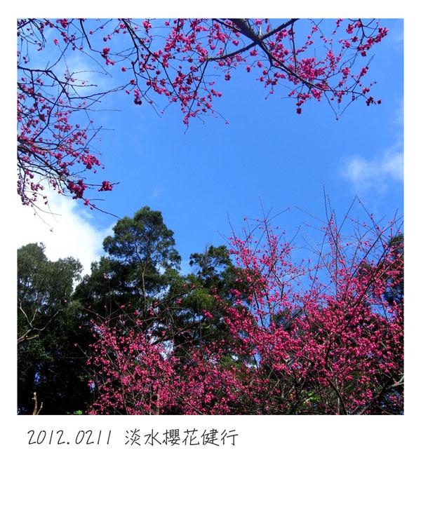 2012-02-11-淡水櫻花健行-049.jpg